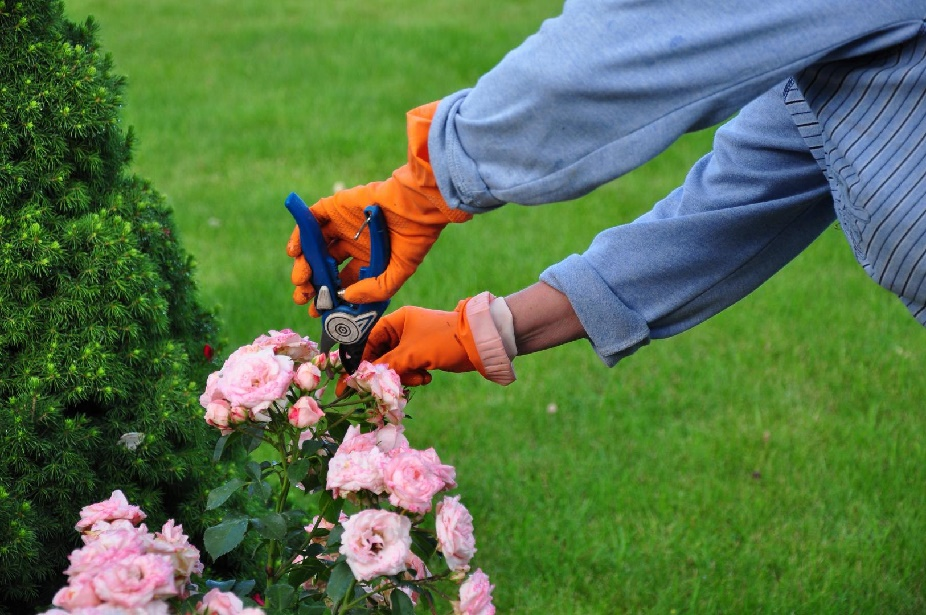 5 Conseils Pour Bien Entretenir Son Jardin Home Dome
